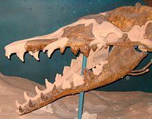 Basilosaurus cetoides.jpg