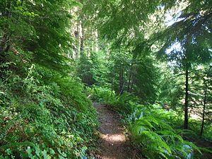 Forest trail, fern, hemlock.JPG