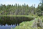湖泊与针叶林