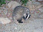 Badger Crete.jpg