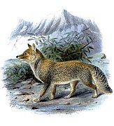 Painting of gay and brown fox