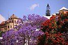 Beautiful jacaranda Antananarivo Madagascar.jpg