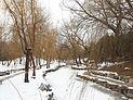 冬柳 - Willows in Winter - 2012.12 - panoramio.jpg