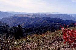 Osudok Forest.jpg