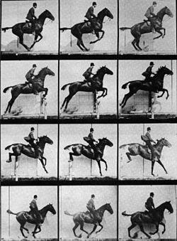 Muybridge horse jumping.jpg