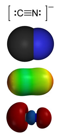 Space-filling model of the cyanide anion: carbon bound to smaller nitrogen atom