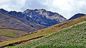 El grito (Andes Venezolanos).jpg