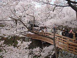 樱花季节时城门