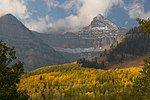 秋季,山脚的杨树
