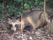 Gray and brown fox by a bush