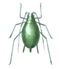 Aphid icon.png