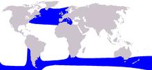 Cetacea range map Long-finned Pilot Whale.PNG