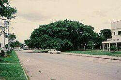 以无花果树为主体的大树国家纪念碑为卡布韦的代表之一
