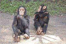 Unnamed - Chimpanzee - Central African Republic.jpg