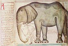 Sketch of elephant