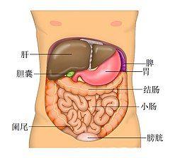 Anatomy Abdomen Tiesworks zh.jpg