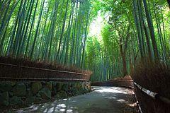Sagano Bamboo forest, Arashiyama, Kyoto.jpg