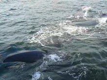 File:20130924 Hermanus Bay whale watching 1.webm