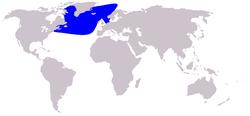 Cetacea range map Northern Bottlenose Whale.PNG