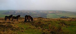 Three small brown horses on a grassy area of Exmoor. In the distance are hills.