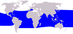 Cetacea range map Pygmy Killer Whale.PNG