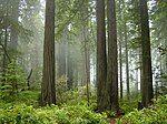 Redwood National Park, fog in the forest.jpg