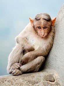 Cute Monkey cropped.jpg