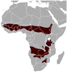 Roan Antelope Hippotragus equinus distribution map.png
