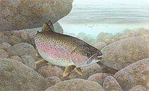 Rainbow trout FWS 1.jpg