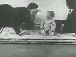 File:Little Albert experiment (1920).webm