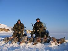 Two men with guns behind nine carcasses of hunted wolves