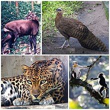 Photographs of Native species in Vietnam the crested argus; the red-shanked douc, a monkey; the Indochinese leopard and the saola, a bovine.