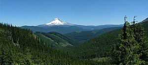 Mt Hood Natl Forest.jpg