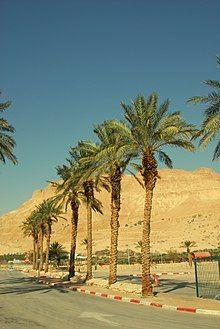 Пальмы (2008).jpg