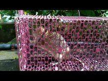 File:Rat caged.webm