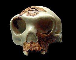 Homo antecessor reconstruccion.jpg