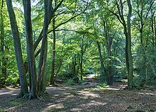 A photograph of a woodland scene