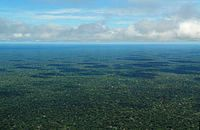 Aerial view of the Amazon Rainforest, near Manaus.