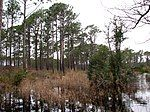 帕茜池自然步道旁侧的沼泽