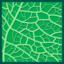 Leaf morphology reticulate.png