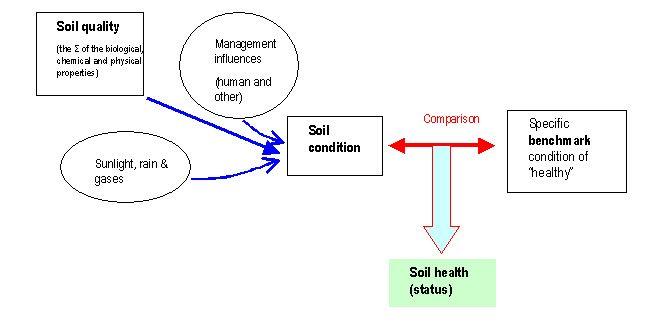 SoilHealthConcept.jpg