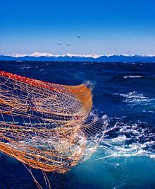 Photo of partially submerged net, with distant snow-covered mountain range below clear sky in background