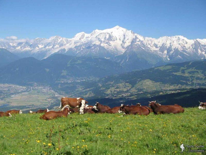 Cherche location Maison/Chalet en Savoie du 22-25décembre