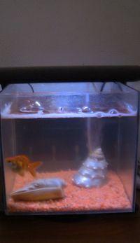 Donne aquarium 12litres avec son poisson japonais (plus accessoires)
