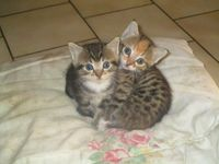 Donne 2 adorables chatons 2 mois