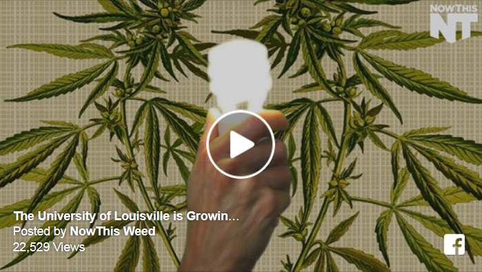 University of Louisville is Growing Hemp for Renewable Energy Research