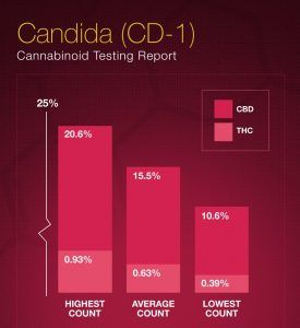 """""""The Highest CBD Count We Have Seen"""" – 5 new CBD Dominant Strains"""