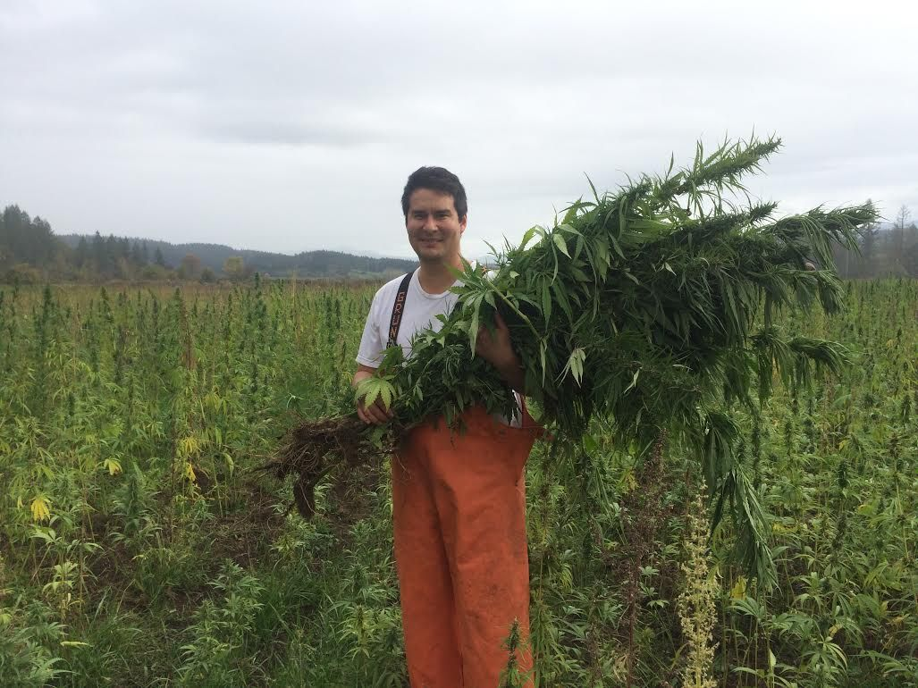 Alaska farmers push for hemp legalization