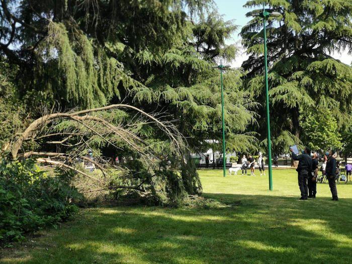 Troppo feroce, impicca cane albero Roma denunciato