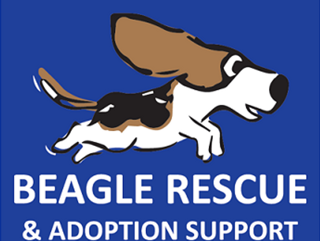 Beagle Rescue And Support